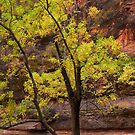 Cottonwood Tree, Zion Canyon by Stephen Vecchiotti