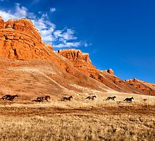Home On the Range by Janet Fikar