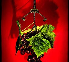 Grape vine by andreisky