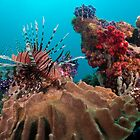 Lion Fish, Papua New Guinea by Allan Saben