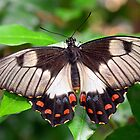Beautiful Butterfly by gmws