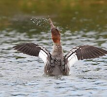 Common Merganser shakes it off by Jim Cumming