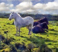 Dartmoor Ponies, Autumn 2011 by buttonpresser