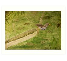 Spotted Sandpiper on the Kinnickinnic River Art Print