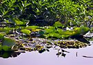 Watery Leaves - Lake Ainsworth by Odille Esmonde-Morgan