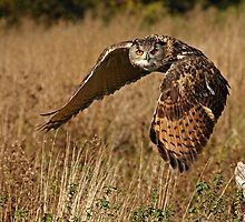 Focused in Flight by Mark Hughes