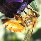 Sweet Nectar by starwarsguy