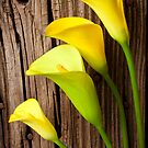 Calla lilies against wooden wall by Garry Gay