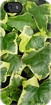 """Variegated ivy Hedera Helix """"Goldchild"""" for iPhone by Philip Mitchell"""
