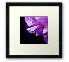 Drops on a Pelargonium Framed Print
