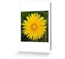 Dandelion Beauty Greeting Card