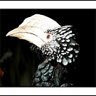 Hornbill by Rose Santuci-Sofranko