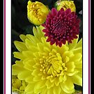 Autumn Chrysanthemums by Rose Santuci-Sofranko