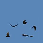 Crows in blue sky by STHogan