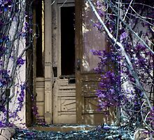 Porte 4 by Roddy Fitzgerald