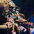 California Spiny Lobster © by jansnow