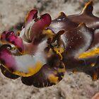 Flamboyant Cuttlefish, Kapalai, Sabah, Malaysia by Erik Schlogl