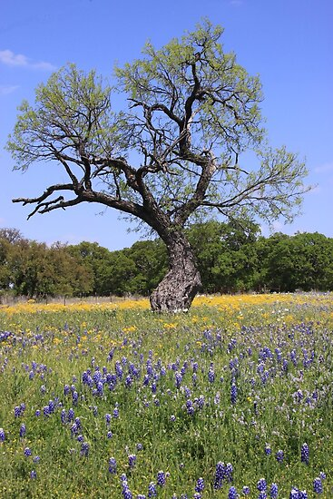 Old Tree in a Field of Wildflowers by Robert Armendariz