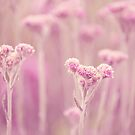 Floral collection by Anne Staub by Anne Staub