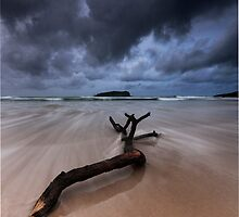 Fingal Heads Driftwood - Fingal Heads - Northern NSW - Australia by Soren Martensen