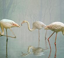 Flamingo Mist by Tarrby