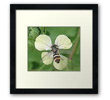Bitty Bee? Framed Print