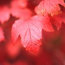 Autumn Leaf Bokeh by Derwent-01