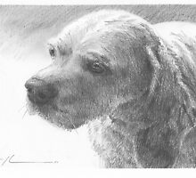 Cocker Spaniel drawing by Mike Theuer