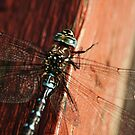 Dragonfly | At the Park by Tamara Brandy