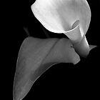 Monotone Bloom by Glenn Cecero