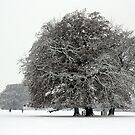 Winter in Petworth Park by Emma Turner