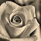 Graceful Rose by Keri Harrish