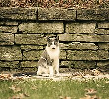 Front Yard Cat  by KatMagic Photography