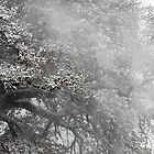 Trees and Snow, Petworth Park. by Emma Turner