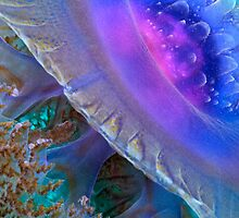Crown Jellyfish Close Up by Henry Jager