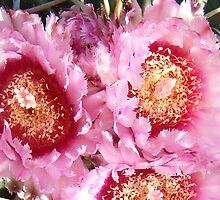 Cactus Blooms Pink by Cassandra Scarborough