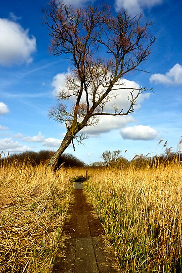 Tree in the reed beds  by Gary Rayner