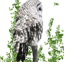 Barred Owl - Keeping an eye out- iPhone Case by paranoidpanic