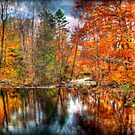 Autumn Stream in the Park by Monica M. Scanlan