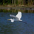 Egret In Flight by NewfieKeith