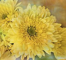 autumn approaches by Teresa Pople