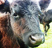 Weaner - Stokes' Farm  - Kirkstall by EdsMum