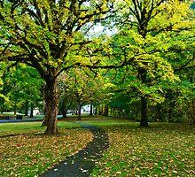 A walk in the park by Dan Mihai