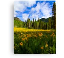 Mule Ear Sunflowers, Colorado Canvas Print