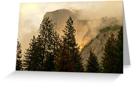 "Gold ""Rush"" in Yosemite National Park by Elaine Bawden"