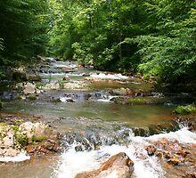 Doe Creek by Annlynn Ward