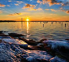 Sunlight On Ice by Carolyn  Fletcher