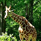 Giraffe by Mercedes Auman