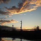 NOVEMBER SUNSET 2011 - ECONFINA CREEK, BAYOU GEORGE, FL by May Lattanzio