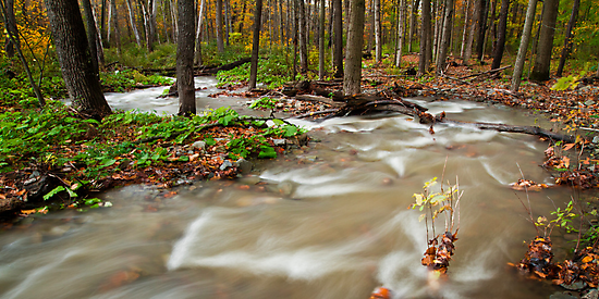 Meandering Stream by Zach Pezzillo